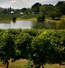 Crane-Creek-vineyard.jpg