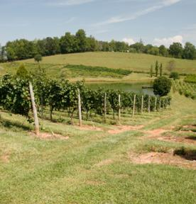 vineyard-Crane-Creek.jpg